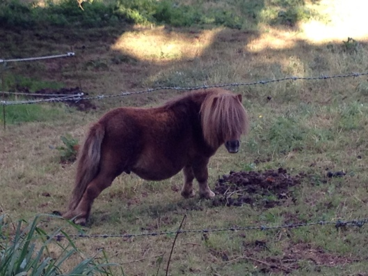 Pony, Normandy