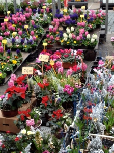 Flowers, French market