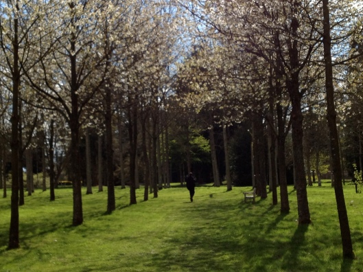 Spring in the arboretum, Château d'Harcourt