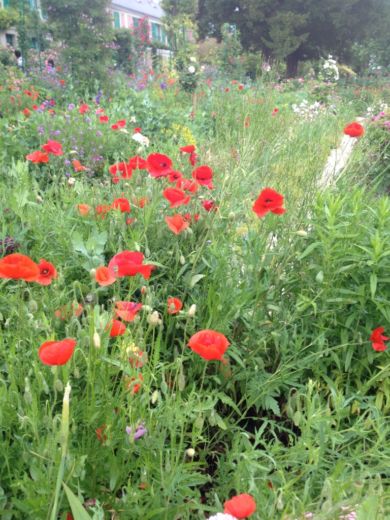 Poppies, Monet's Garden, Giverny