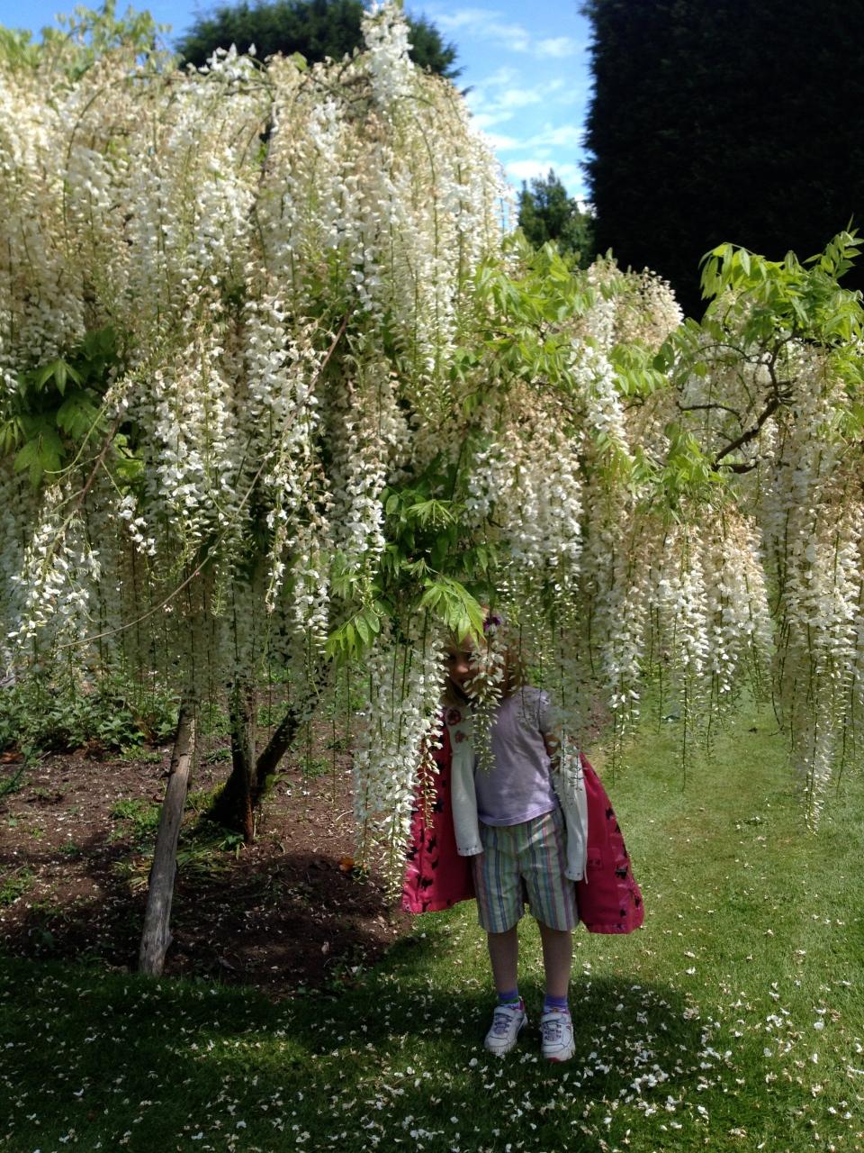 Honeysuckle, Les Bois Des Moutiers