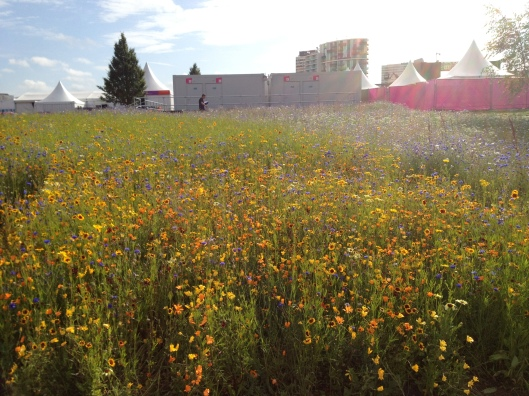 Wildflowers, Olympic Park, London