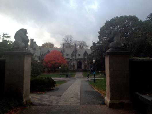 Red Tree, Princeton