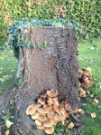 wild mushrooms and tree stump
